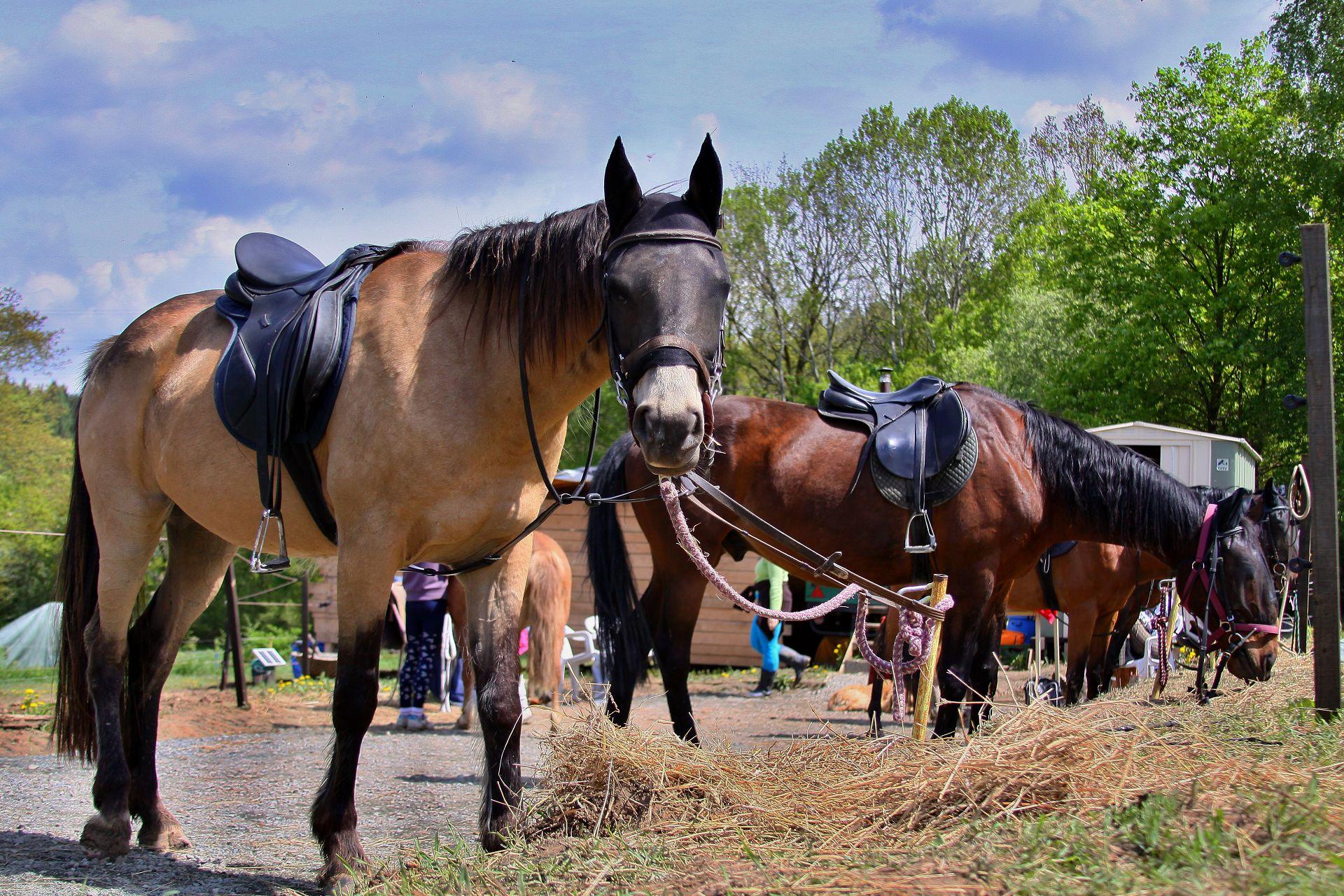Prázdniny na koních